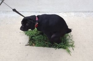 10+ Struggles A Doggo Has To Face If He Belongs To The City Life