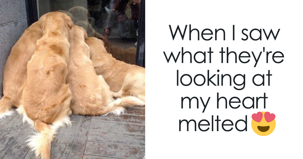 30 Photos To Make You Thank God For Your Labradors And Golden